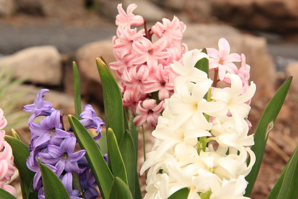 Spring_2012_Nature_Retreat