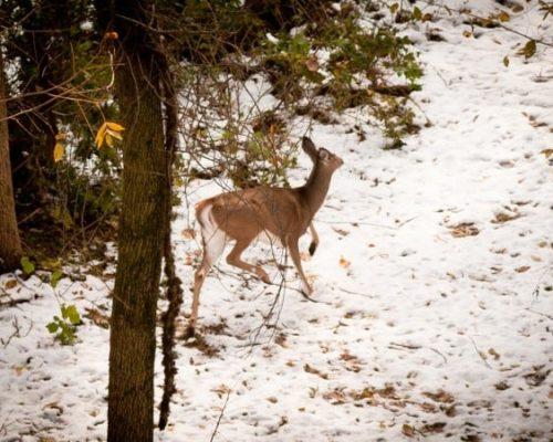 Deer Print Trail_Winter