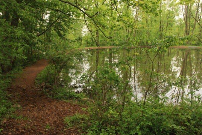 Pond_Summer