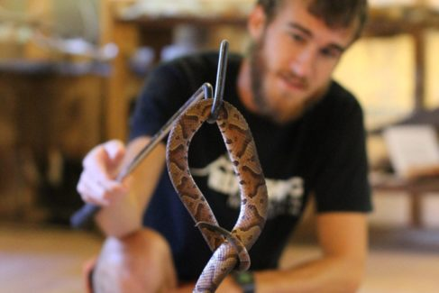 Snake_Staff_Copperhead_Nature Center