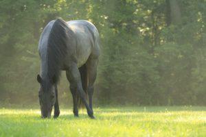 Pony-Rides-Horses-Summer