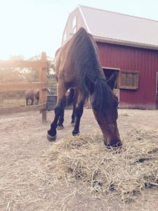 Horse Feeding Summer