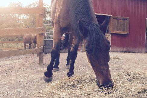 Horse Feeding in Summer