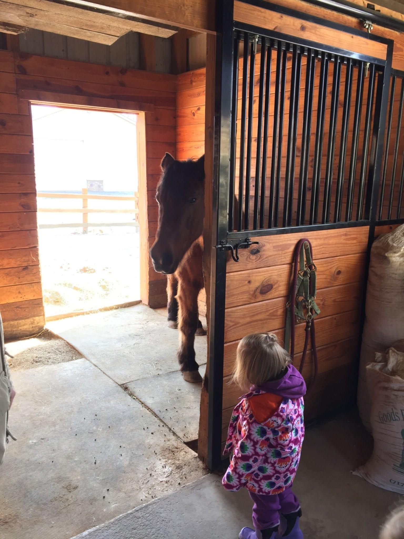 Horse Barn Kids
