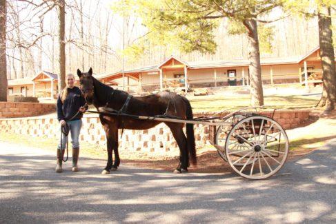 Horse Cart Summer