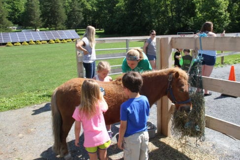 Farm Animal Experience - Children with Horses in Summer