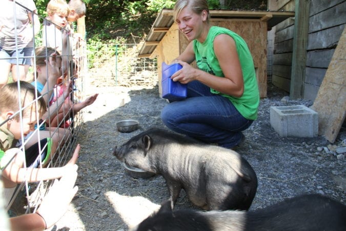 Farm Animal Experience_Pigs_Children_Summer_Hannah
