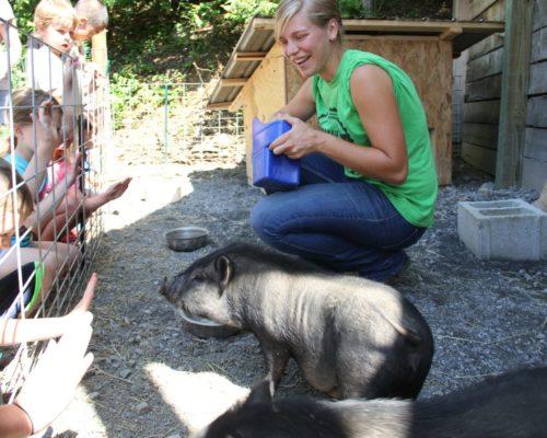 Farm Animal Experience_Pigs_Children_Summer_Hannah