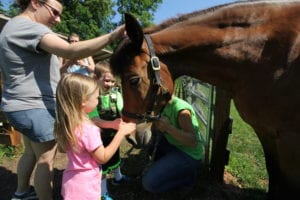 Farm Animal Experience Petting a Horse