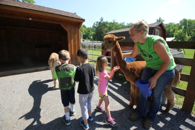 Farm Animal Experience with Alpaca