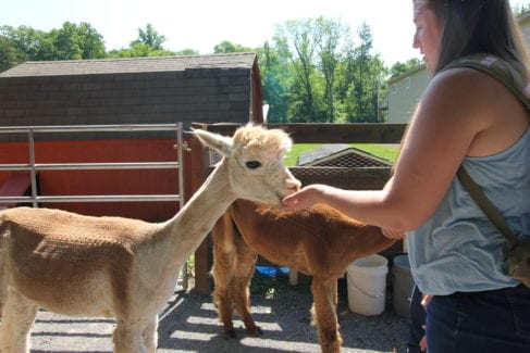 Farm Animal Experience_Alpaca_Women_Summer