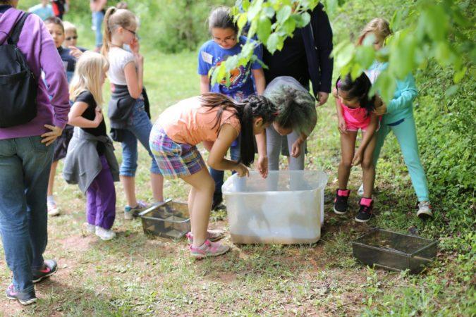 Refreshing Mountain Nature Program Wild life and native animals