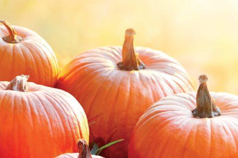 Ziplines, Cornhole, and Pumpkin Smash
