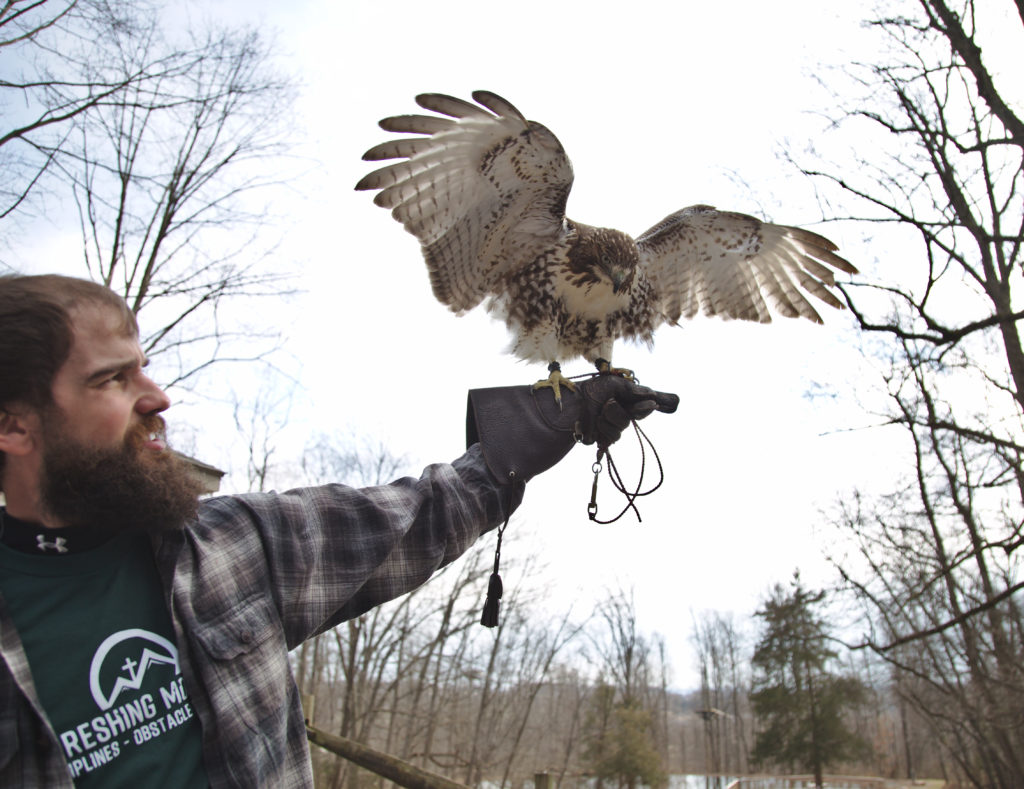 Hawk at Outdoor Wildlife Center