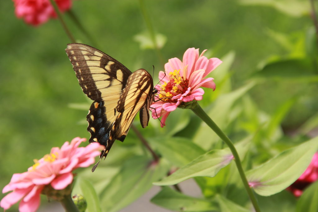 Butterfly on flower at outdoor experience